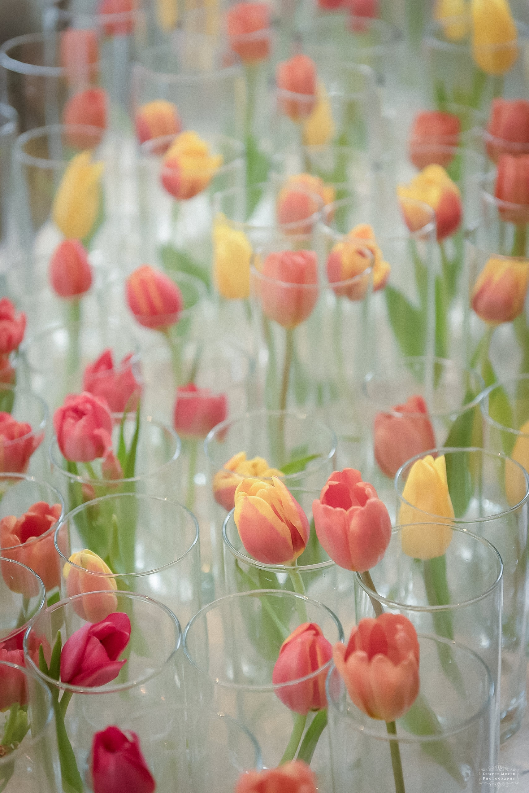 wedding tulips in glass vases